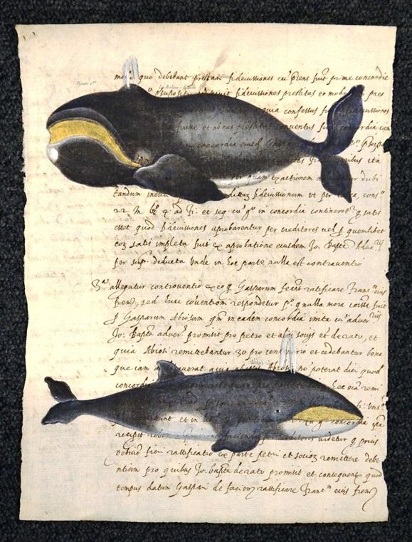 balena doppia su carta antica