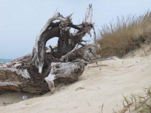 Racconti di mare: Non vi allontanate - Storie del porto di Giampaolo Cantini - Macchia mediterranea